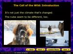 the call of the wild introduction6