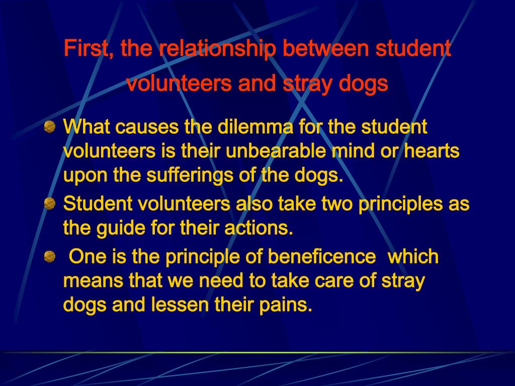 First, the relationship between student volunteers and stray dogs