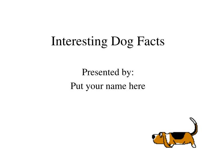 interesting dog facts n.