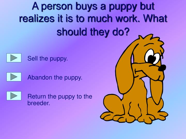 A person buys a puppy but realizes it is to much work what should they do