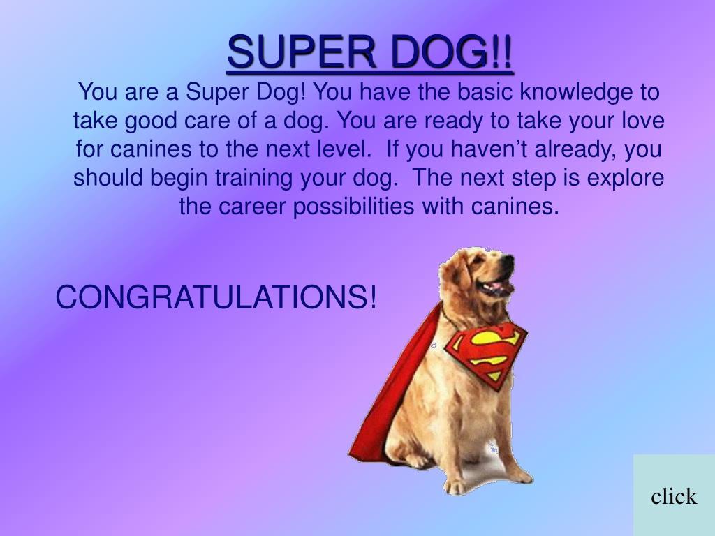 SUPER DOG!!