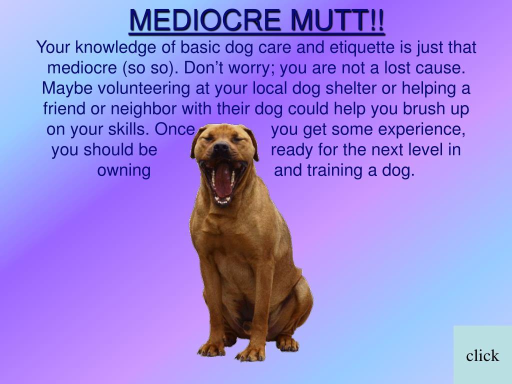 MEDIOCRE MUTT!!