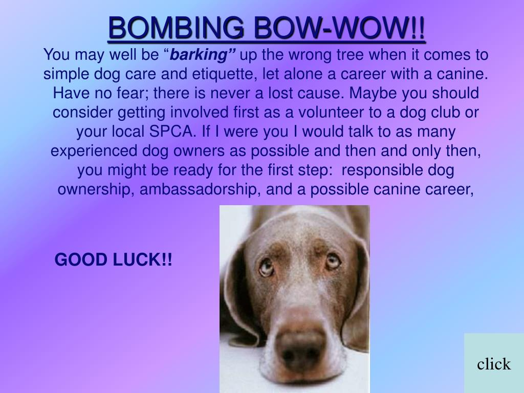 BOMBING BOW-WOW!!