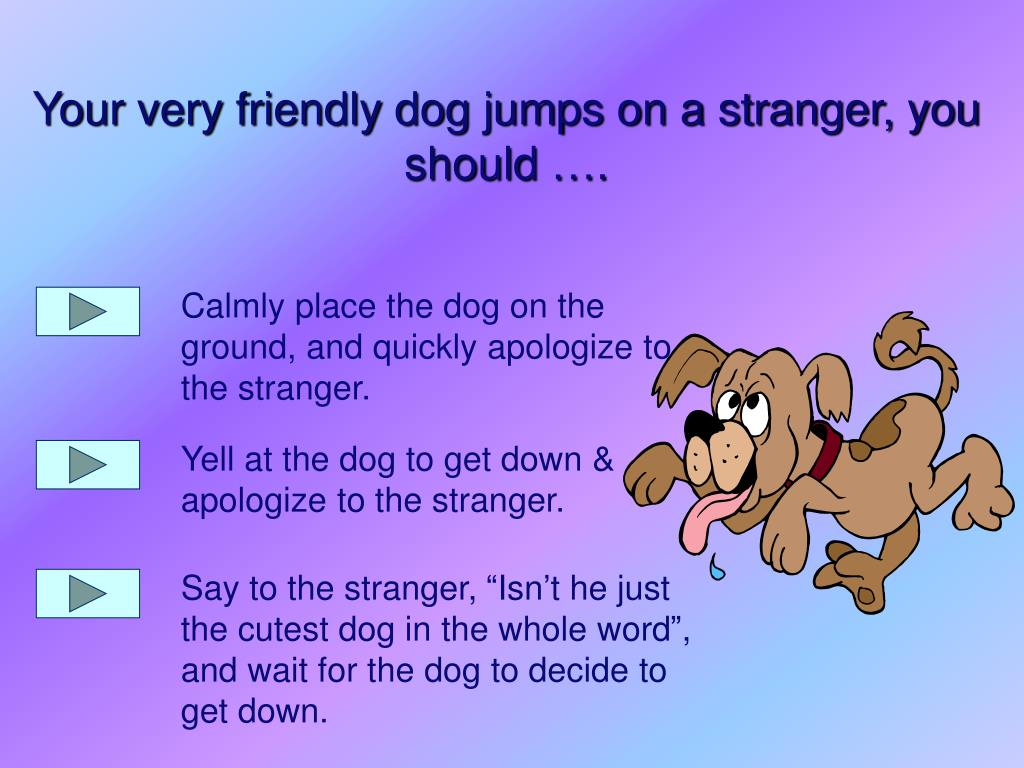 Calmly place the dog on the ground, and quickly apologize to the stranger.