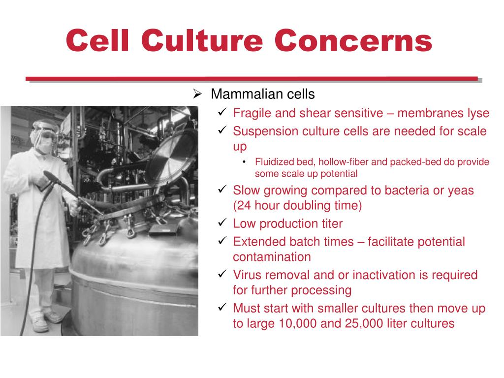 PPT - Plant and Mammalian Tissue Culture PowerPoint