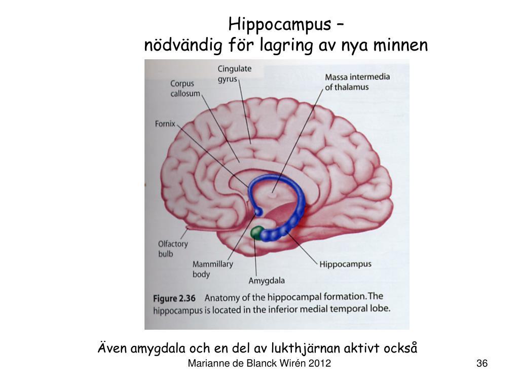 PPT - NEUROPSYKOLOGI 2 PowerPoint Presentation, free download - ID:1125015