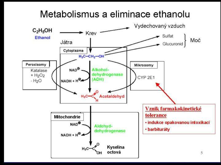 Toxikokinetika ethanolu při jednorázové aplikaci