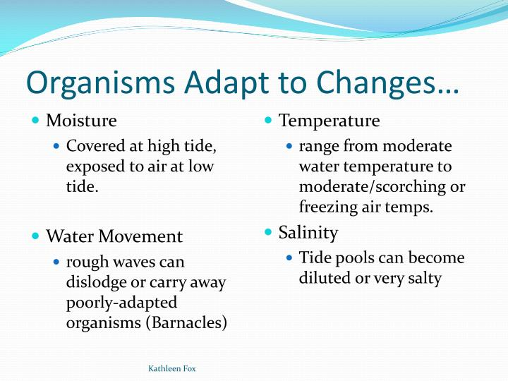 Organisms Adapt to Changes…