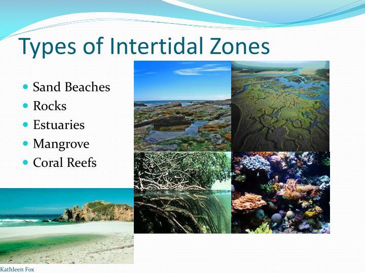 Types of intertidal zones