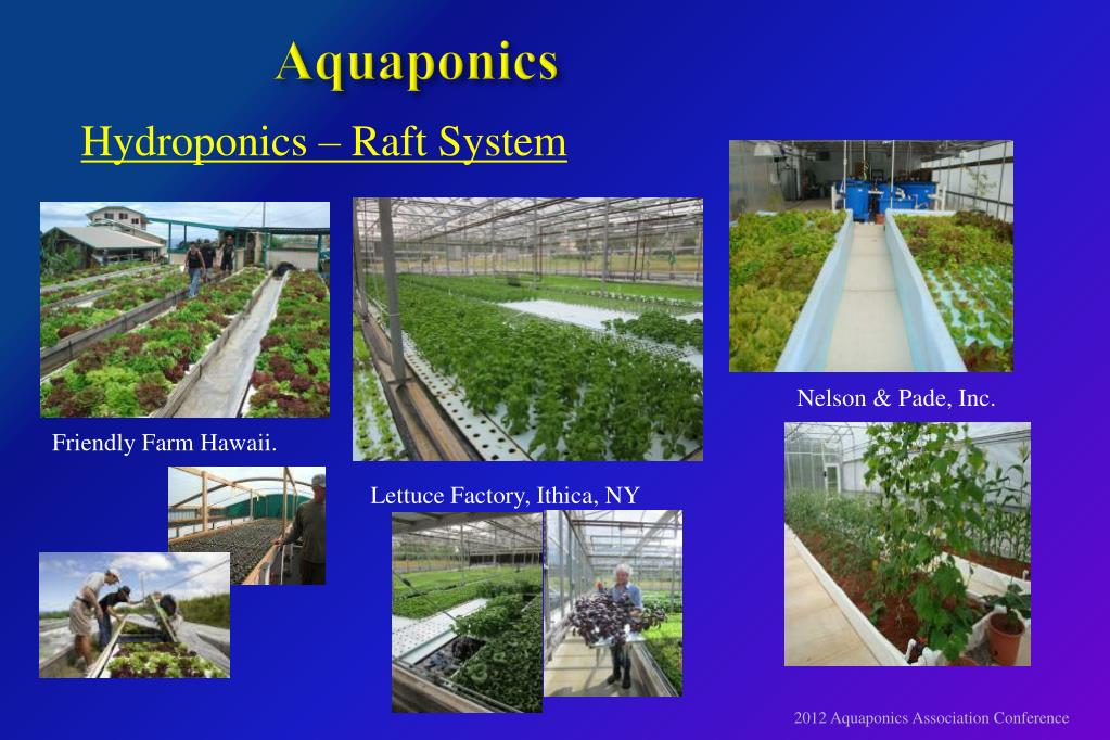 PPT - A n ENGINEERS V IEW of RECIRCULATING AQUACULTURE and