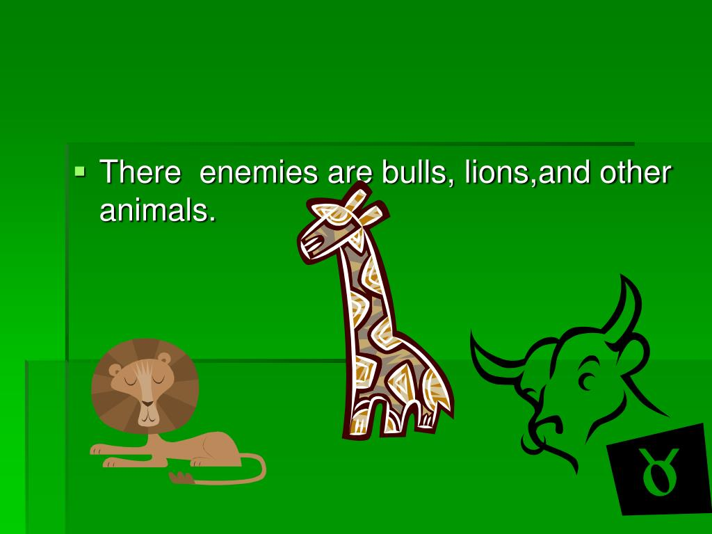 There  enemies are bulls, lions,and other animals.