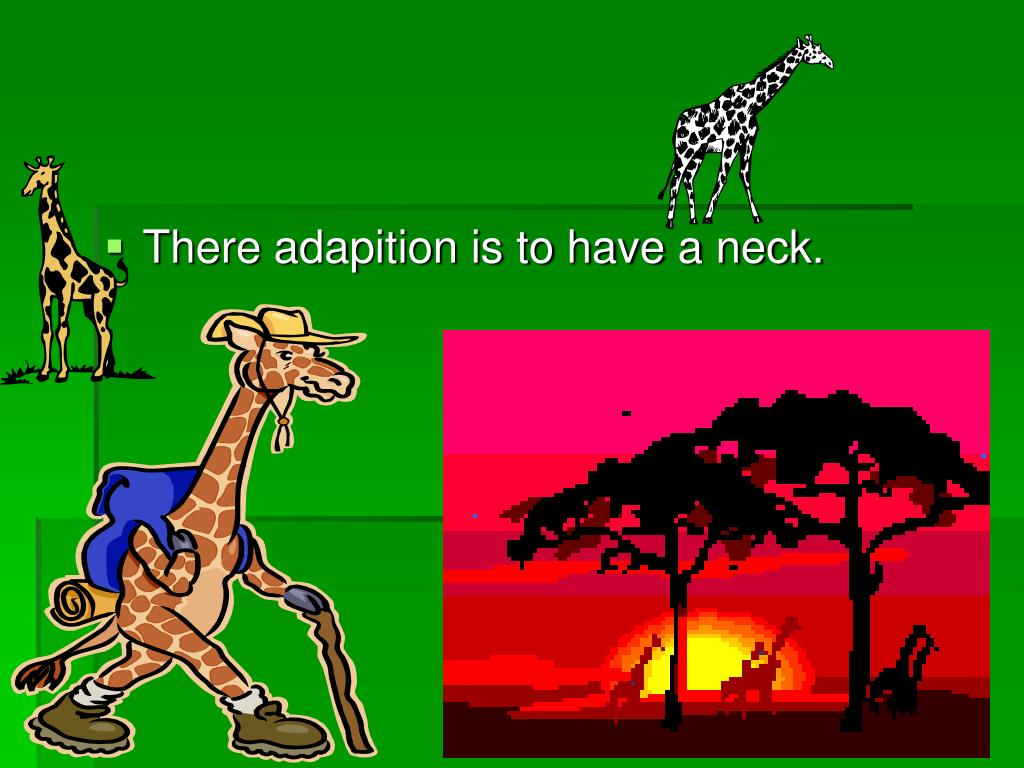 There adapition is to have a neck.