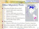 other migratory feats
