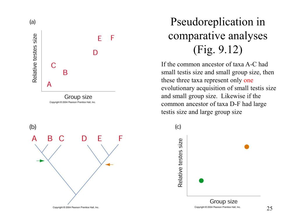 Pseudoreplication in comparative analyses (Fig. 9.12)