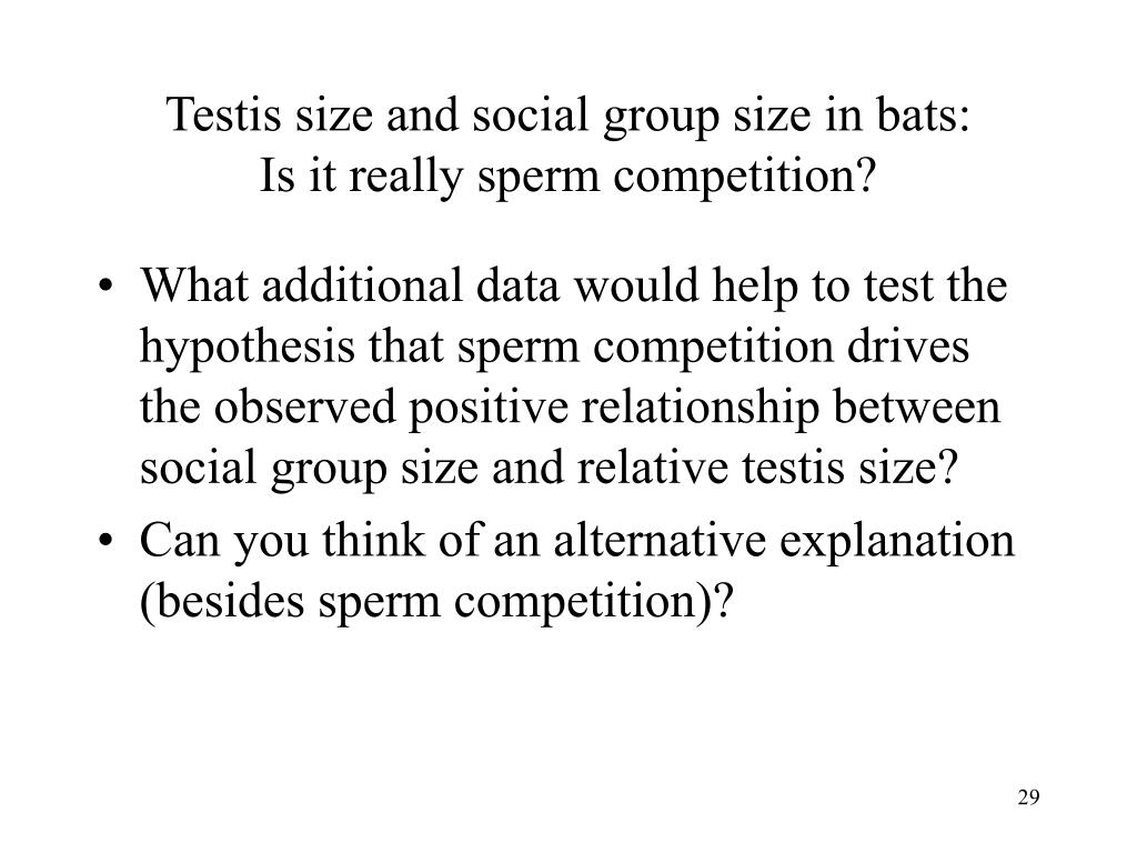 Testis size and social group size in bats: