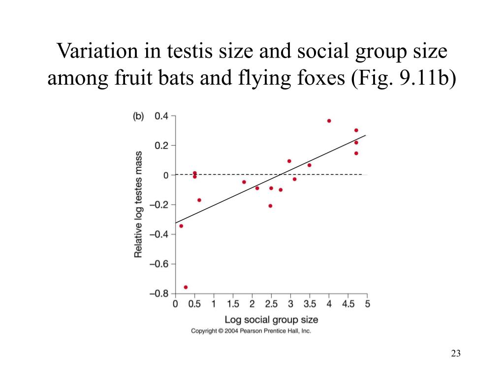 Variation in testis size and social group size among fruit bats and flying foxes (Fig. 9.11b)