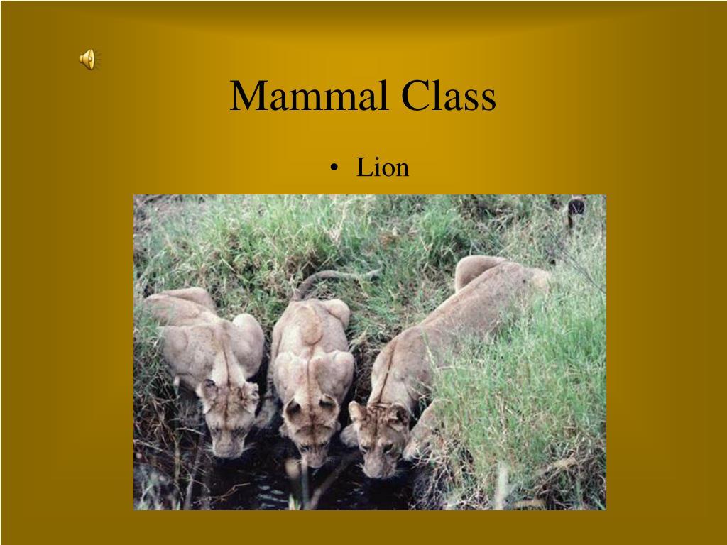 mammal class l.