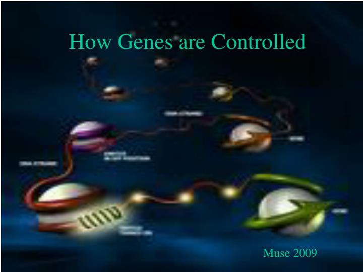how genes are controlled n.