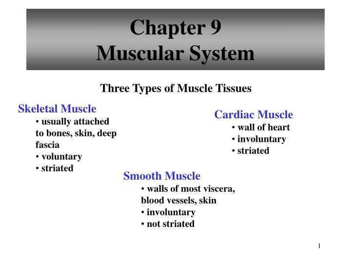 chapter 9 muscular system n.