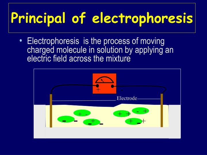 Principal of electrophoresis
