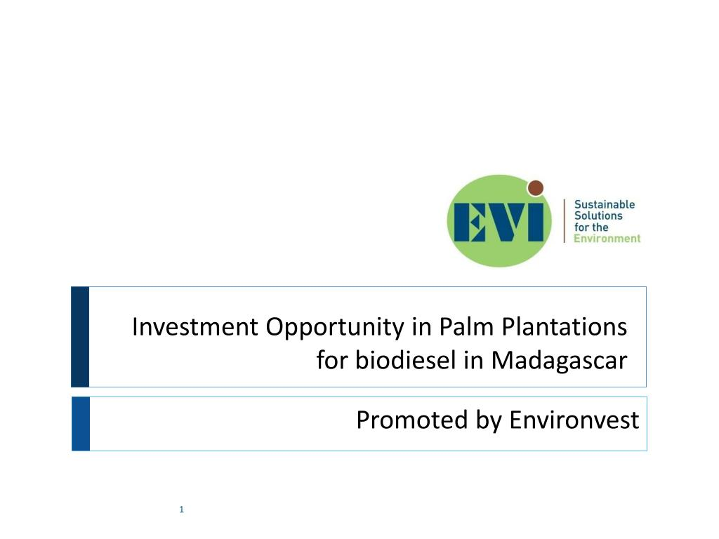investment opportunity in palm plantations for biodiesel in madagascar l.