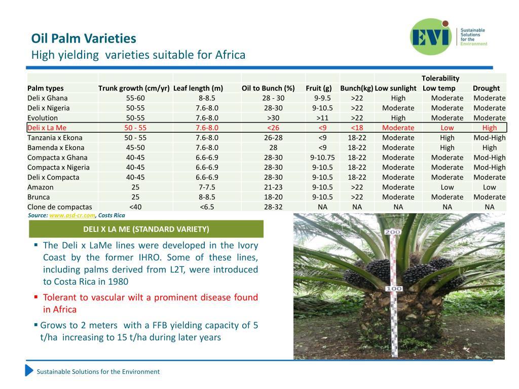 Oil Palm Varieties