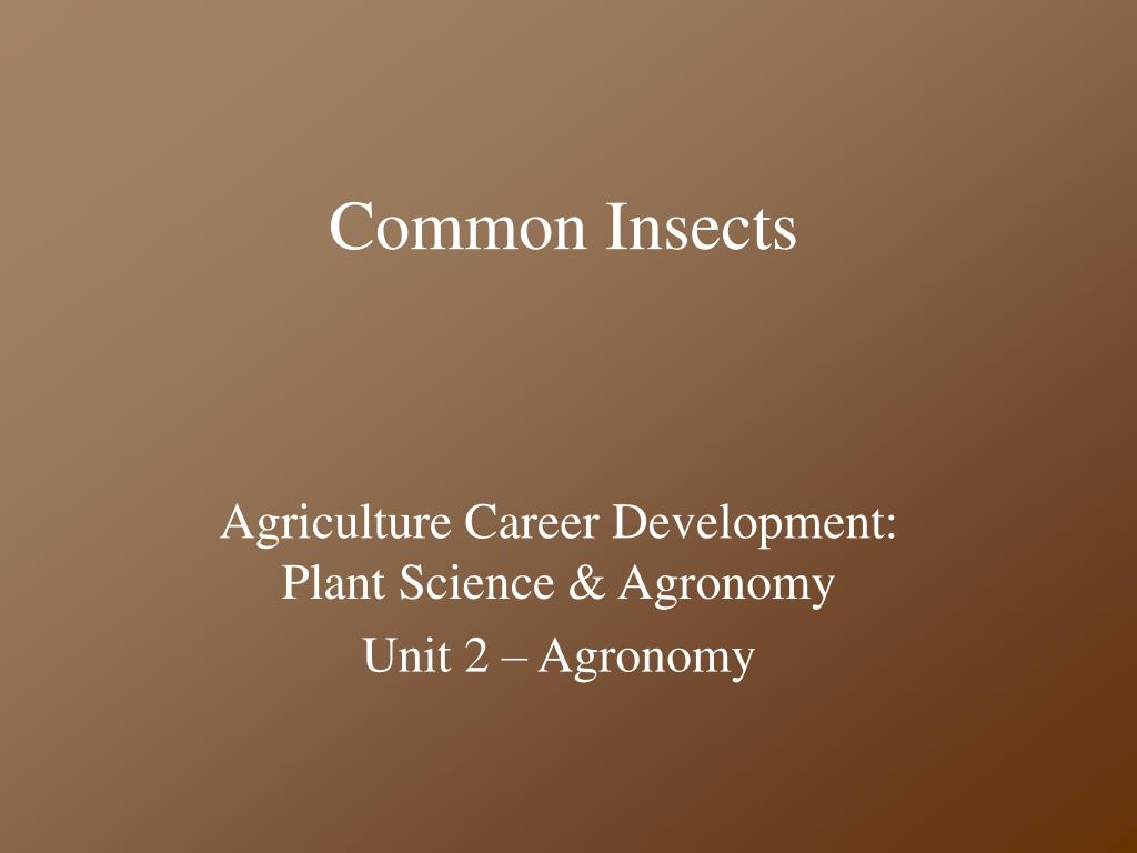 common insects l.