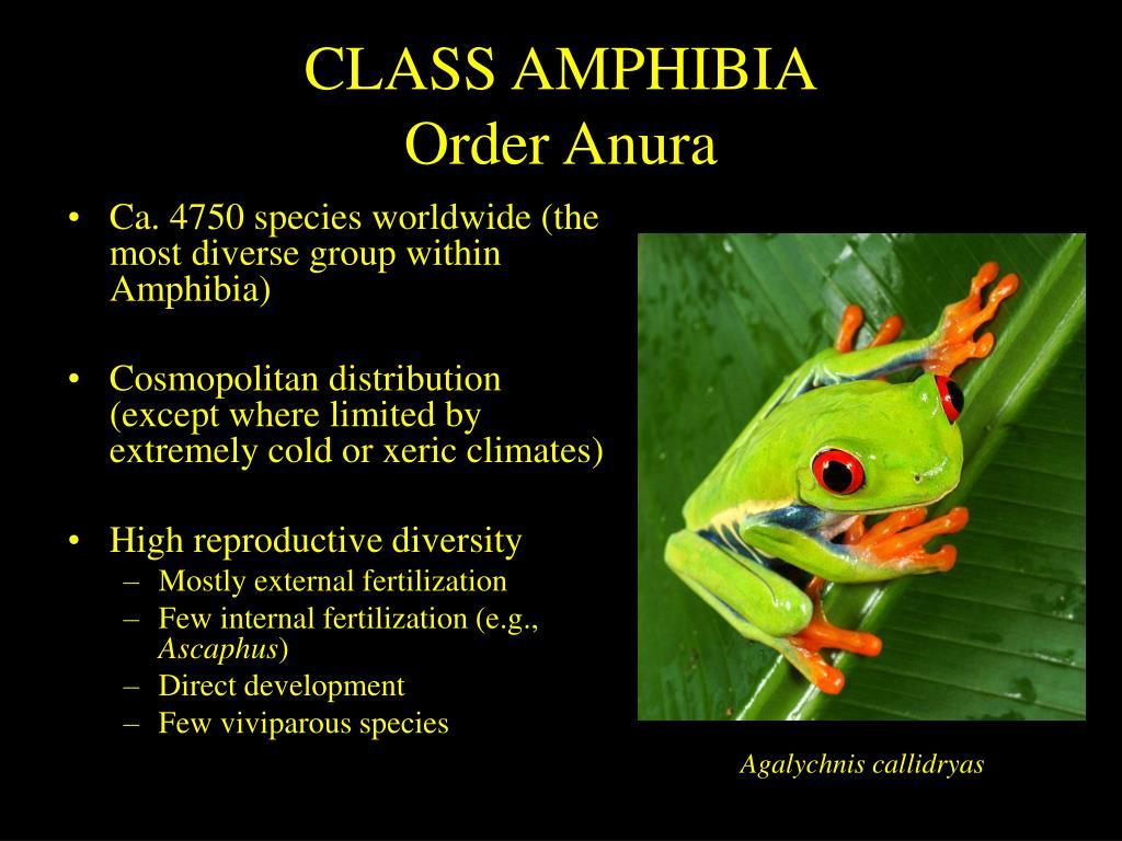 class amphibia order anura