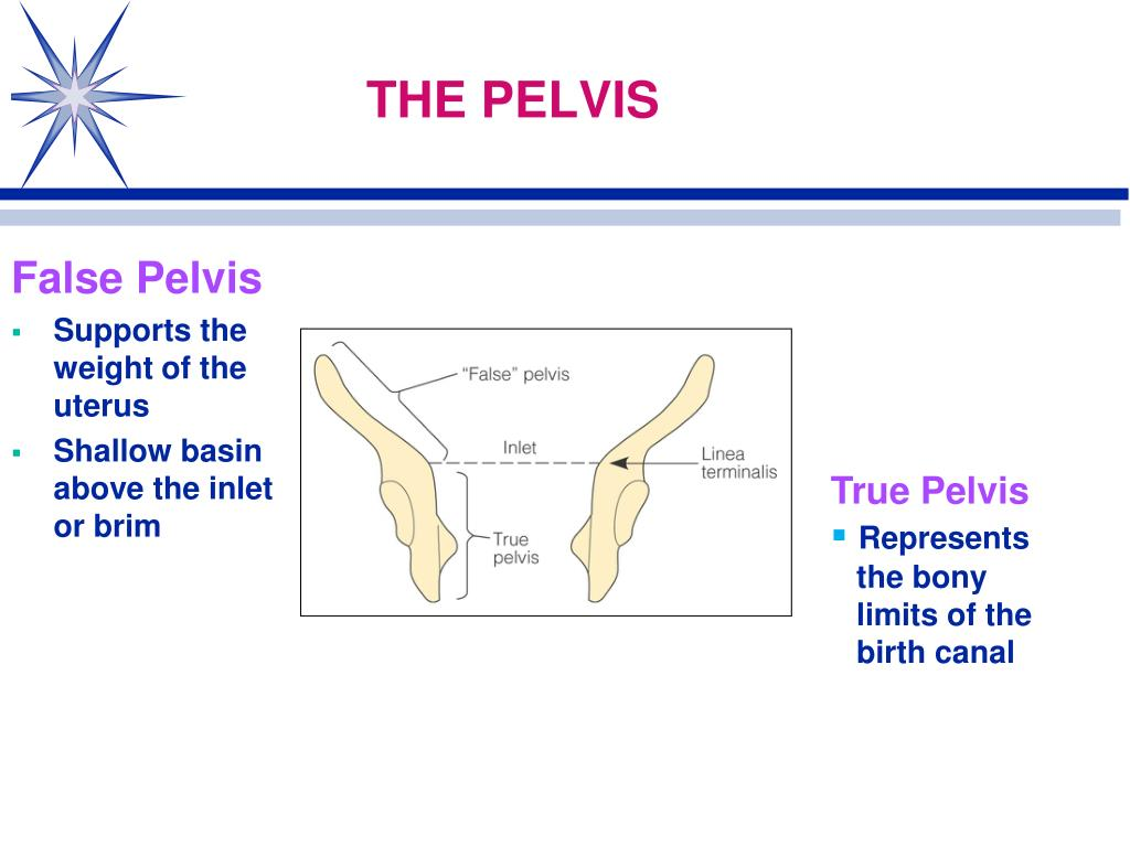PPT - Normal Labor and Delivery Physiological Adaptations ...
