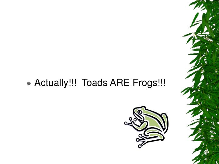 Actually!!!  Toads ARE Frogs!!!