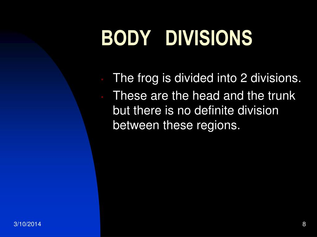 BODY   DIVISIONS