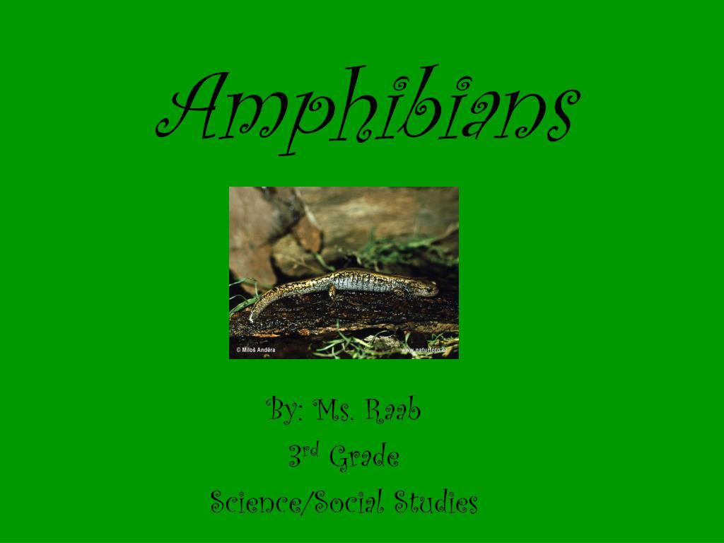 amphibians l.
