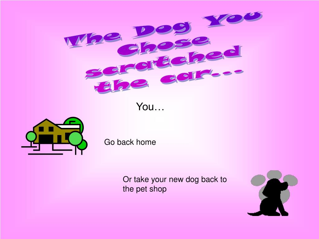 The Dog You