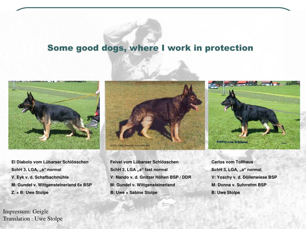Some good dogs, where I work in protection