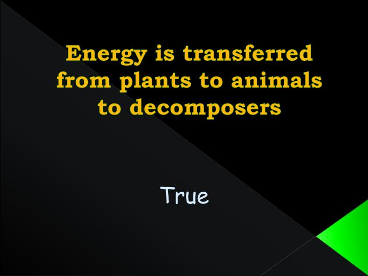 Energy is transferred from plants to animals to decomposers