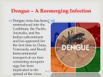 dengue a reemerging infection