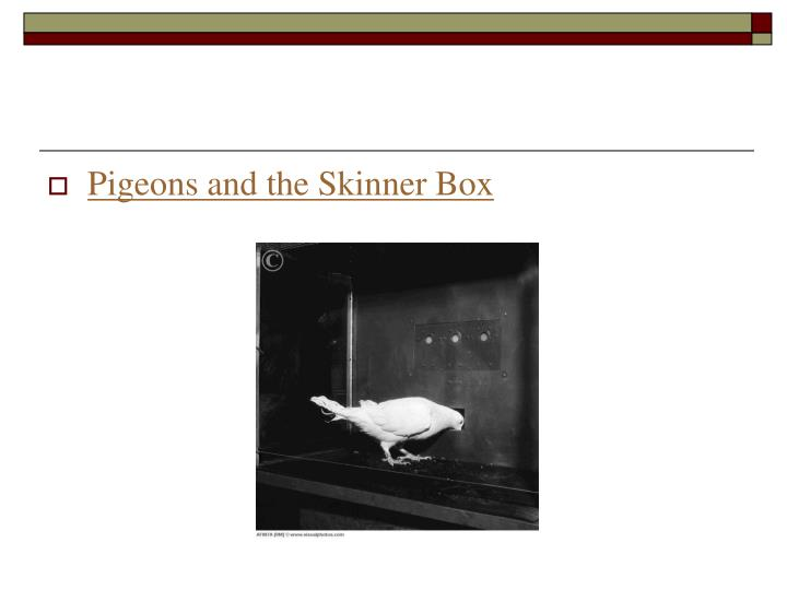 Pigeons and the Skinner Box