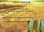 crop disease
