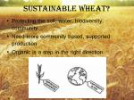sustainable wheat