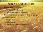 wheat and culture1