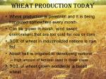 wheat production today1