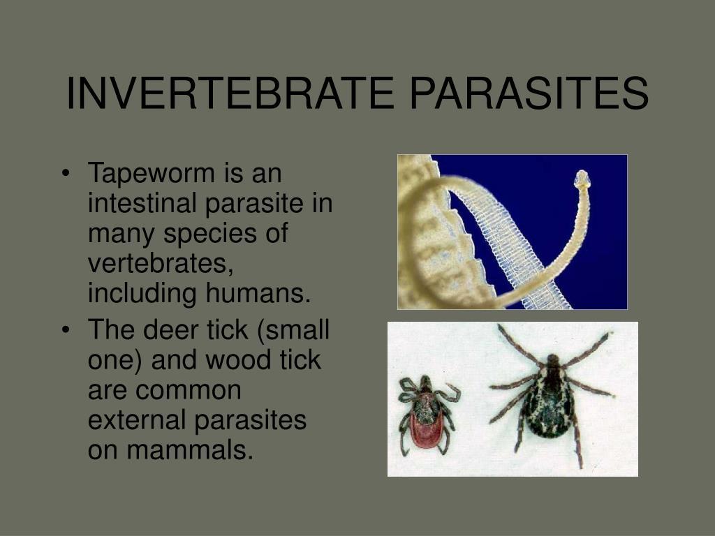 INVERTEBRATE PARASITES