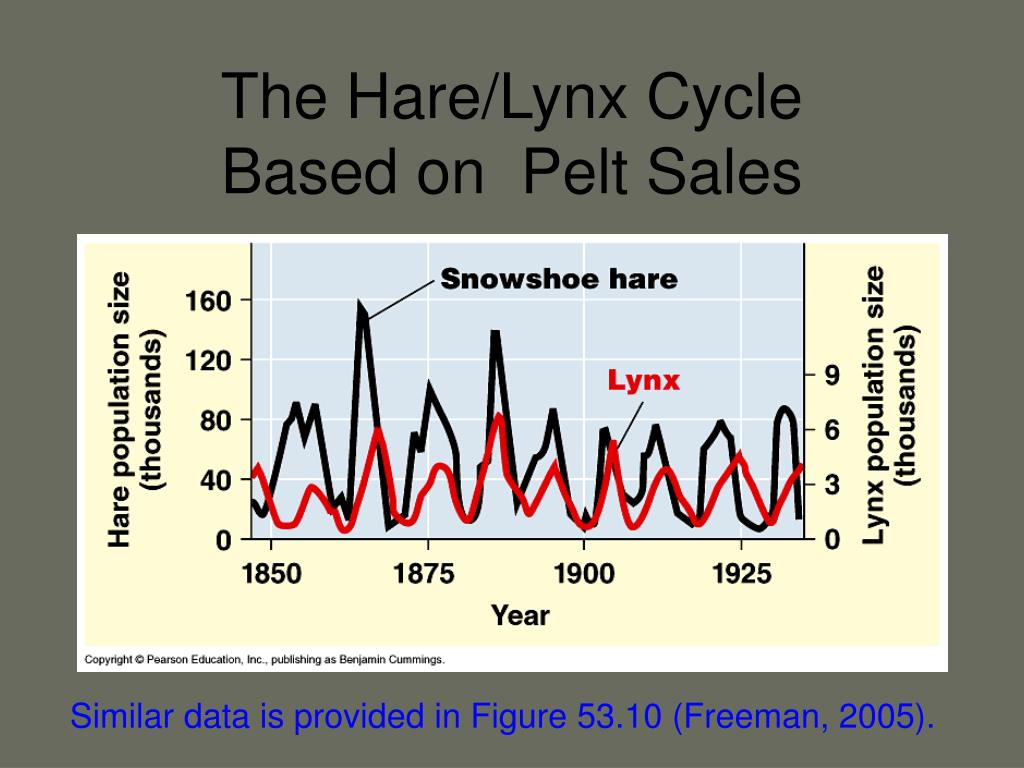 The Hare/Lynx Cycle