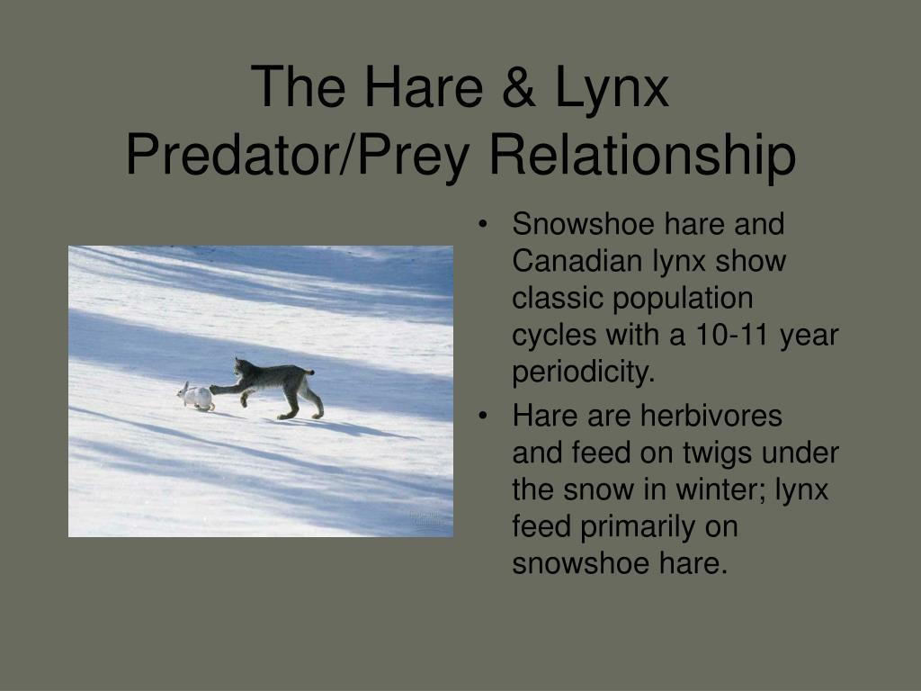 The Hare & Lynx Predator/Prey Relationship