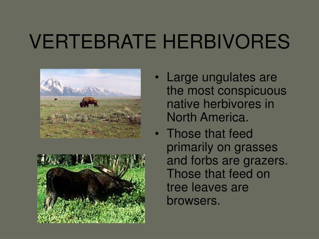 VERTEBRATE HERBIVORES