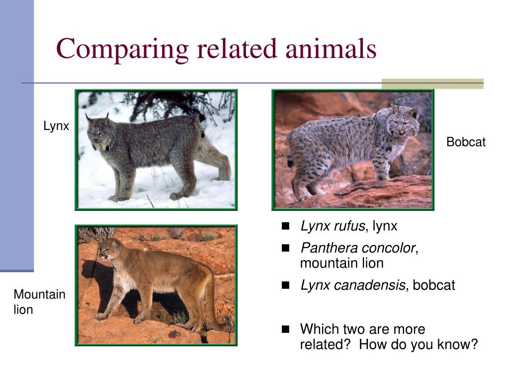 Comparing related animals