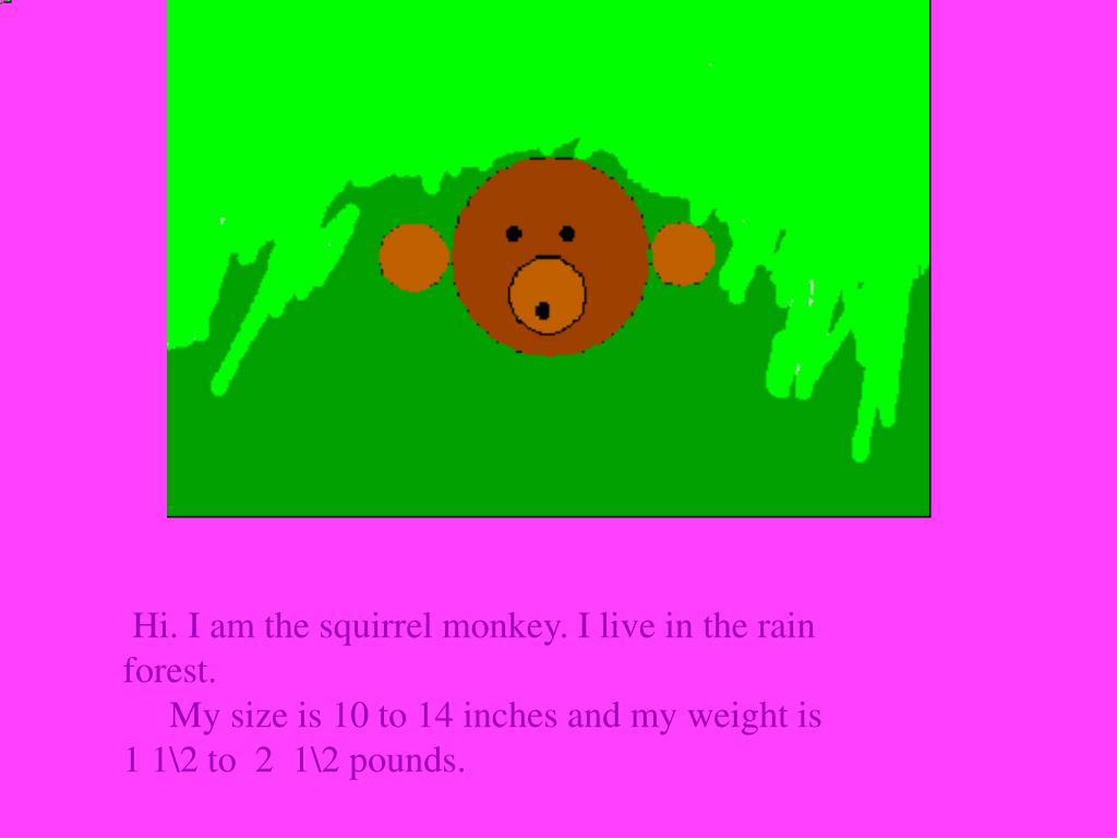 Hi. I am the squirrel monkey. I live in the rain forest.