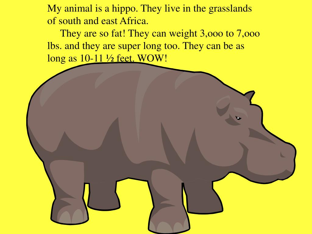 My animal is a hippo. They live in the grasslands of south and east Africa.