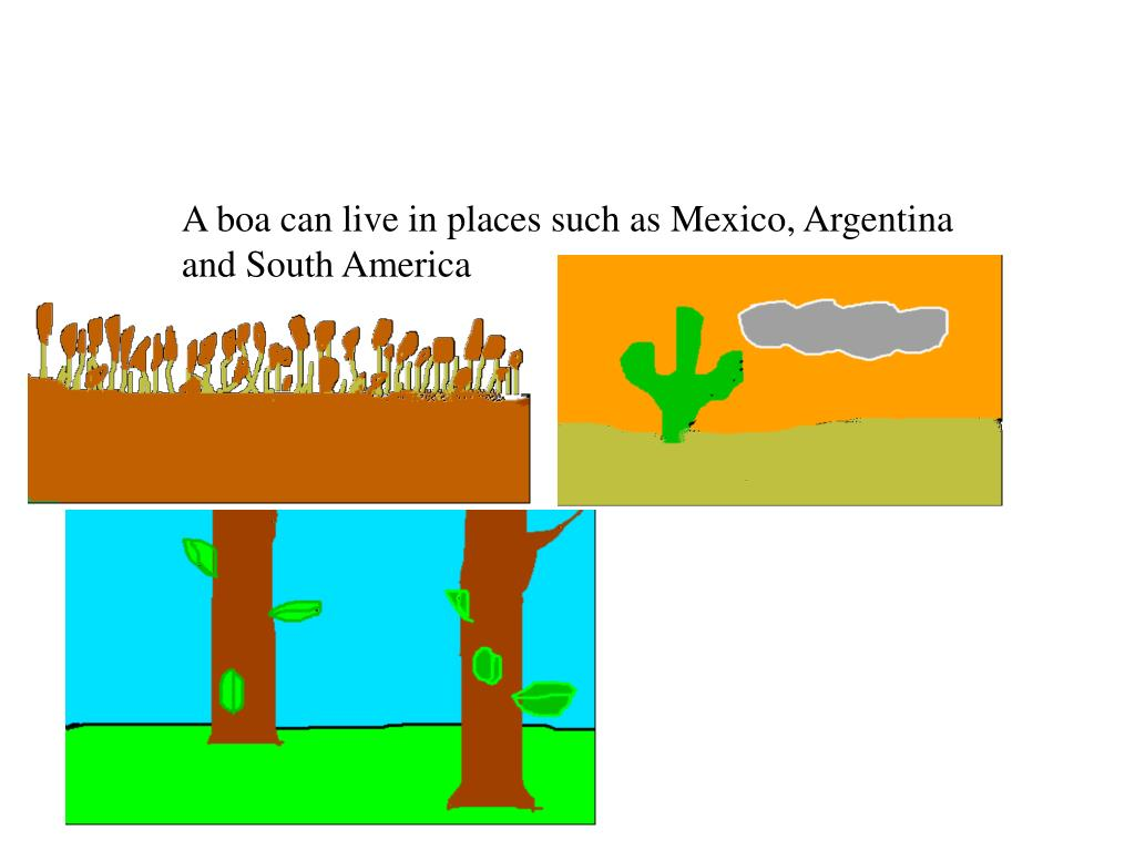 A boa can live in places such as Mexico, Argentina and South America