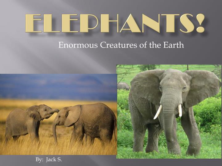 elephants n.